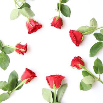 Elegancka czerwona róża wielozadaniowy kwiatowy tło