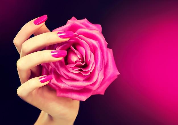 Elegancka kobieca ręka z różowym manicure na paznokciach. piękne, smukłe i wdzięczne palce czule trzymają rozłożony pączek róży. manicure i kosmetyki.