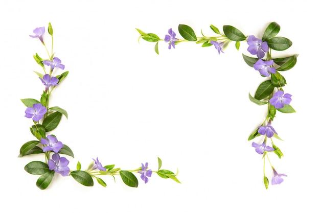 Elementy do dekoracji kwiatów i liści barwinek. białe na białym tle. miejsce na twój napis.
