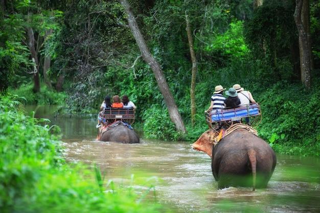 Elephant trekkingowa przygoda przez dżunglę w tajlandii