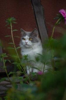 Emocjonalny portret kota wiosna. portret kota wiosna. świeżość i przyjemny aromat letnich ziół i kwiatów.