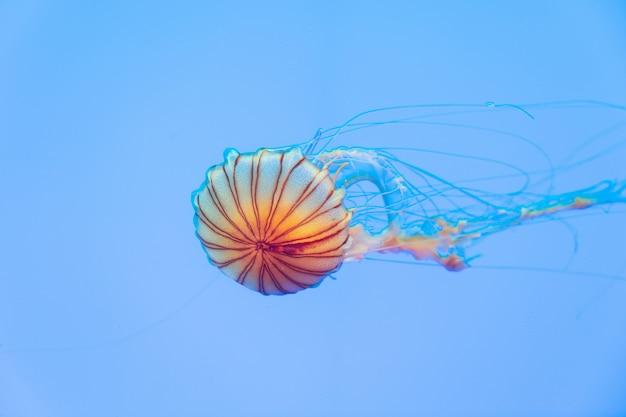 Energetyczne meduzy unoszą się w oceanie