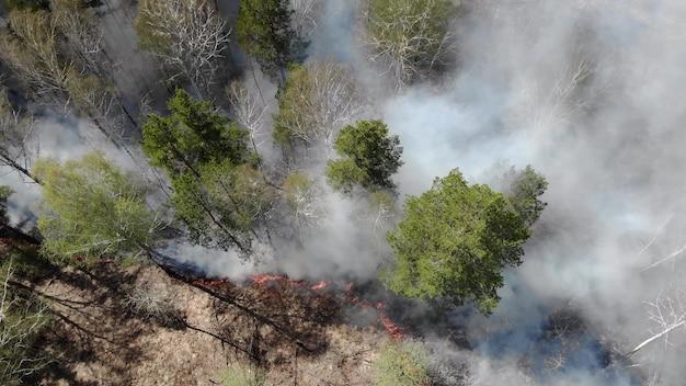 Epicki widok z lotu ptaka na palenie dzikiego ognia. duże chmury dymu i rozprzestrzenianie się ognia. wylesianie lasów i tropikalnej dżungli. pożary amazonii i syberii. spalanie suchej trawy. zmiany klimatyczne, ekologia, ziemia