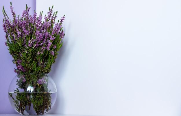 Erica carnea wrzosiec zimowy, wrzos kwitnący zimą, wiosenny wrzosiec alpejski różowe kwiaty. kwitnienie erica carnea roślin ozdobnych, z bliska