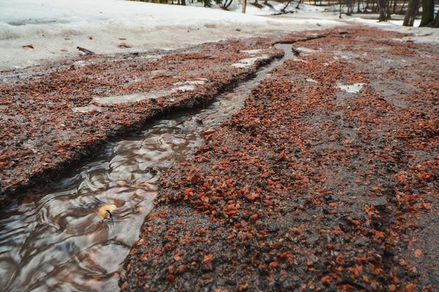 Erozja wód powodziowych. strumień wiosny. ziemia zmyta przez strumień.