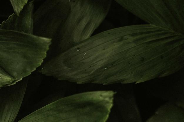 Estetyczna tapeta w tle liści, tropikalny obraz przyrody