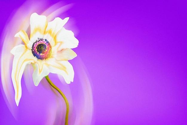 Estetyczne tło fioletowe tapety, biały kwiat anemonu trippy abstrakcyjny wzór