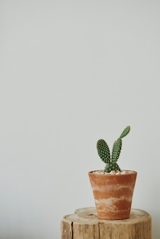 Estetyczny dom z kaktusem na drewnianym stołku