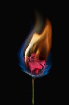 Estetyczny płonący kwiat róży, realistyczny efekt płomienia na ciemnym tle