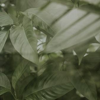 Estetyka dżungli w tle ciemnego liścia dla postu na instagramie