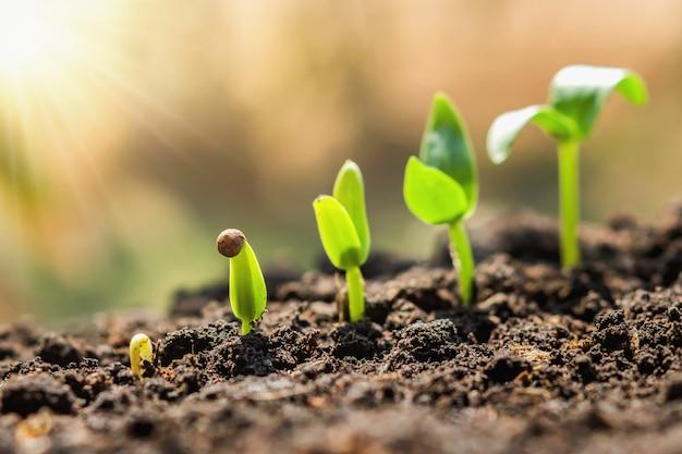 Etap wzrostu wysiewu roślin. koncepcja rolnictwa