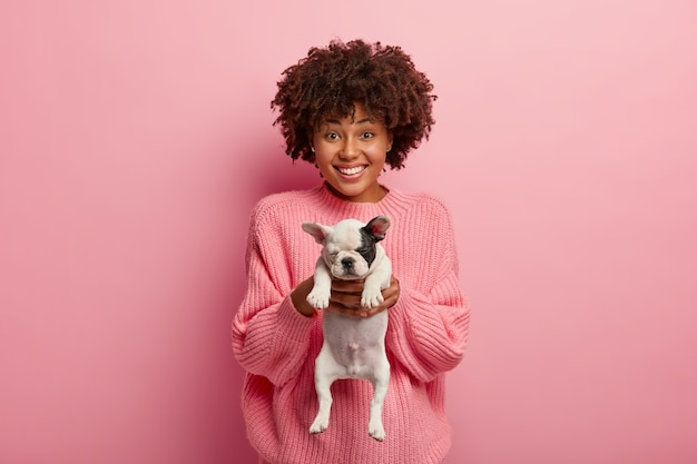 Etniczna piękna radosna kobieta daje ci małego szczeniaka buldoga francuskiego, prosi o opiekę nad zwierzęciem, ma zębaty uśmiech, nosi duży sweter, odizolowany na różowej ścianie.