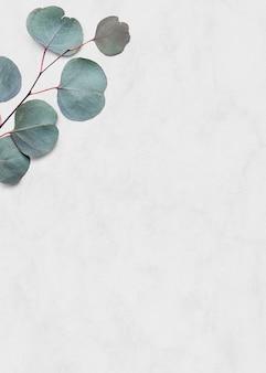 Eukaliptus srebrny dolar biały marmurowy tło