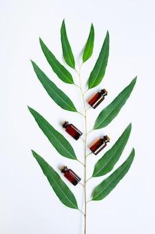 Eukaliptusowego oleju butelka z eukaliptusową gałąź na białym tle.