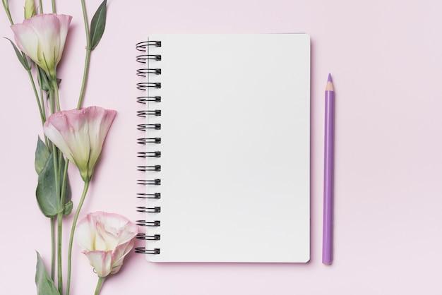 Eustoma kwitnie z pustym ślimakowatym notatnikiem z purpurowym ołówkiem przeciw różowemu tłu