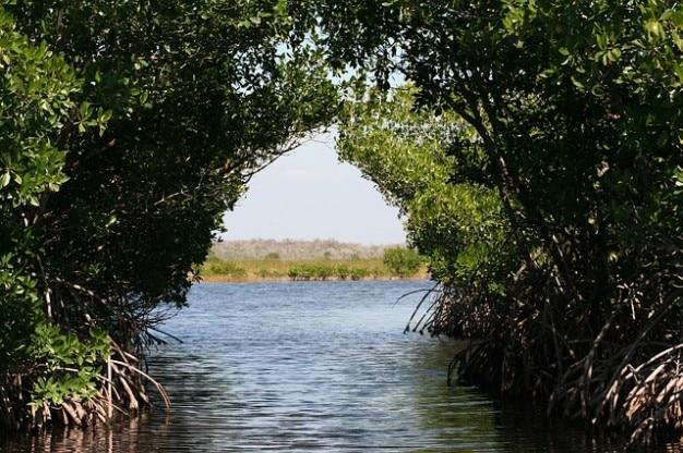 Everglades namorzynowe bagna