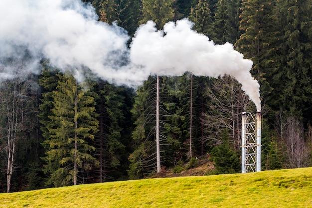 Fajka z gęstym białym dymem w lesie sosnowym