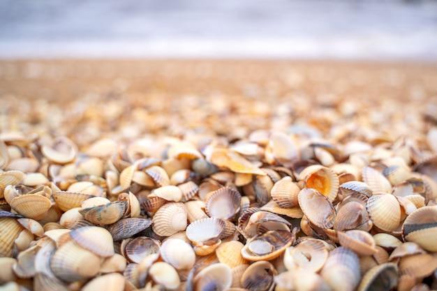 Fala morska biegnąca w kierunku wybrzeża z małych muszli w skanii w szwecji