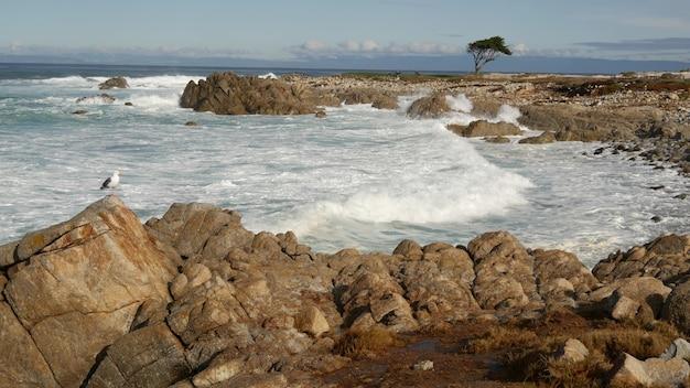Fale oceanu i skały, monterey, północna kalifornia, usa. 17-kilometrowa przejażdżka w pobliżu big sur, nadmorskiego kurortu golfowego przy autostradzie pacific coast highway. bryzgająca woda, morska bryza żwirowej plaży. drzewo cyprysowe.