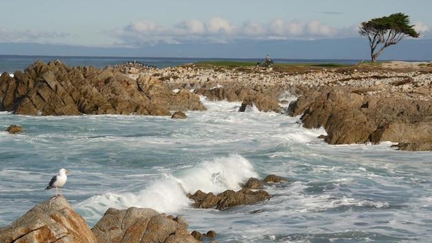 Fale oceanu i skały monterey północna kalifornia usa mila jazda w pobliżu big sur nadmorski golf ośrodek turystyczny na wybrzeżu pacyfiku autostrada plusk wody morska bryza kamienistej plaży drzewo cyprysowe