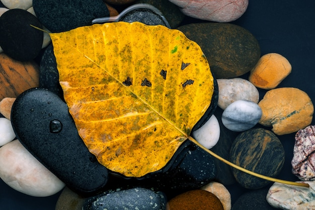 Fall and zen like concepts orange leave fall on river stone.