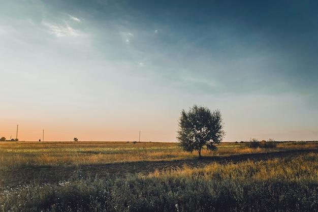 Fantastyczne zielone pole z kolorowymi chmurami. lokalizacja miejsce ukraina, europa. sceniczny obraz koncepcji przemysłu rolnego.