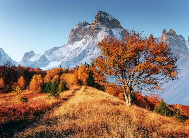 Fantastyczny kolaż ośnieżonych szczytów w porannym słońcu. jesień