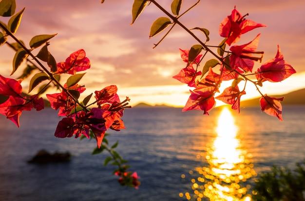 Fantastyczny tropikalny zachód słońca w ogrodzie kwiatów