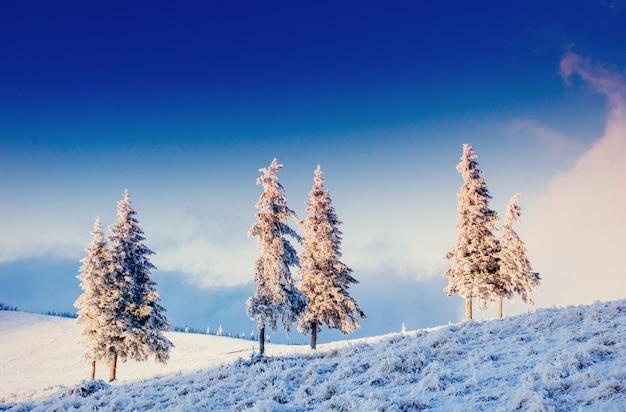 Fantastyczny zimowy krajobraz w górach ukrainy. w wybryki