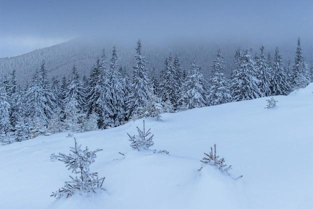 Fantastyczny zimowy krajobraz. w przeddzień wakacji. scena dramatyczna. karpackie, ukraina, europa. szczęśliwego nowego roku