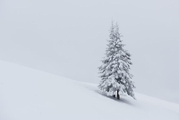 Fantastyczny zimowy krajobraz z jednym śnieżnym drzewem. karpaty, ukraina, europa