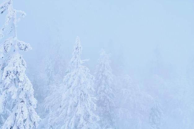 Fantastyczny zimowy zimowy las śnieg wszystko
