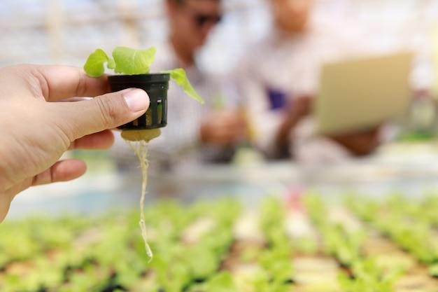 Farma hydroponiczna, testy pracowników i zbieranie danych środowiskowych z sałaty organicznych warzyw hydroponicznych w ogrodzie szklarni.