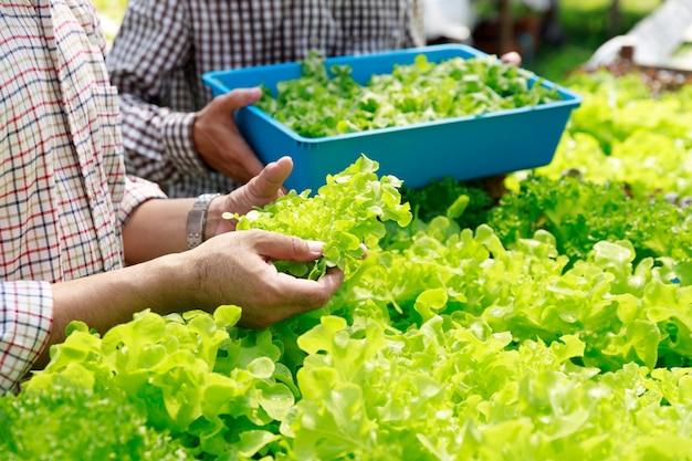 Farma hydroponiczna, zbiór pracowników i zbieranie danych środowiskowych z sałaty organicznych warzyw hydroponicznych w ogrodzie farmy szklarni.