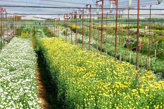 Farma kwiatów