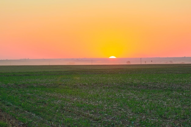 Farma plantacji kawy w słoneczny dzień o zachodzie słońca