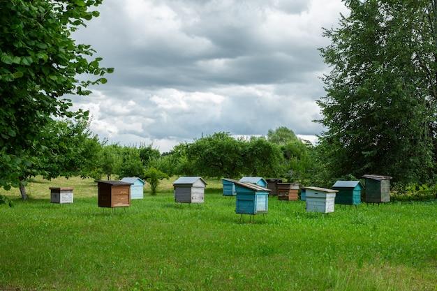 Farma pszczół na zielonym polu w połowie lata.