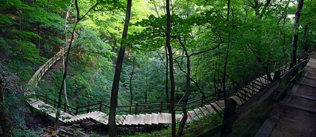 Fascynujący widok drewnianych schodów w pięknym lesie z bujną przyrodą