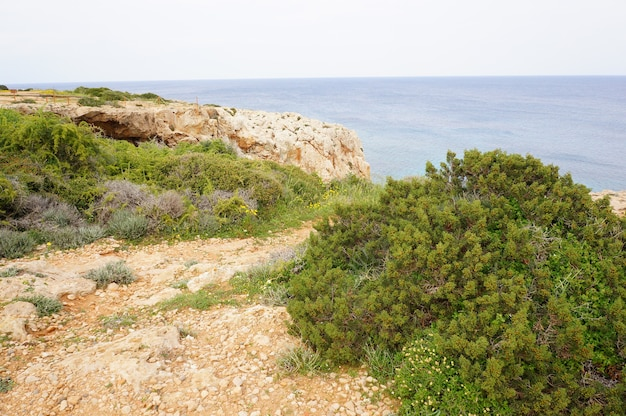 Fascynujący widok na spokojny ocean z klifami i trawą na brzegu
