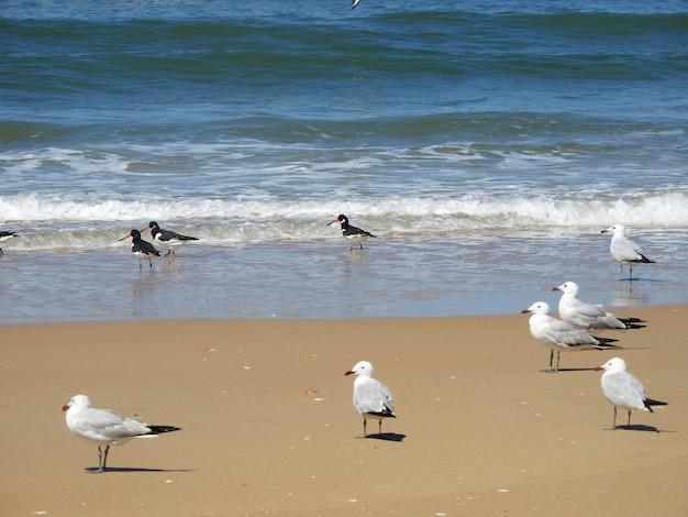Fauna de las playas del parque natural de donana en huelva andalucia espana