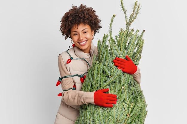 Ferie zimowe i koncepcja przygotowania. uradowana ciemnoskóra kobieta spieszy do domu z zieloną jodłą, która zamierza udekorować na nowy rok, ma na sobie kamizelkę i czerwoną girlandę rękawiczek wokół ciała. boże narodzenie wystrój