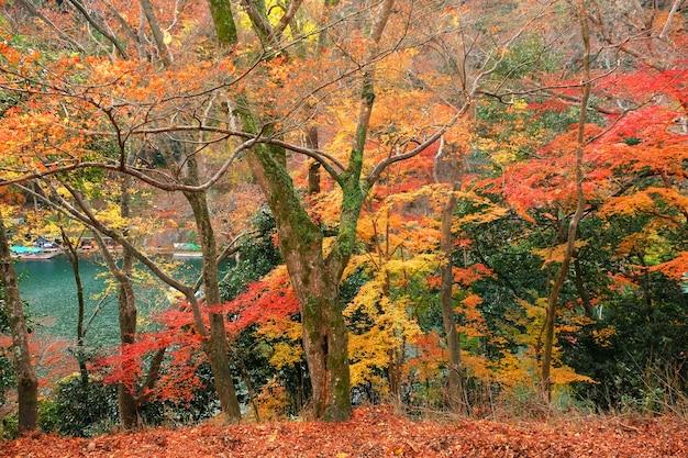 Festiwal kolorowych liści drzew w japonii