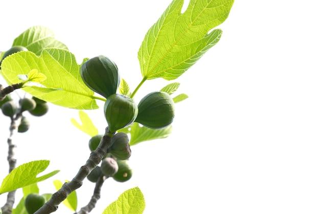 Figi z zielonymi liśćmi na białym tle