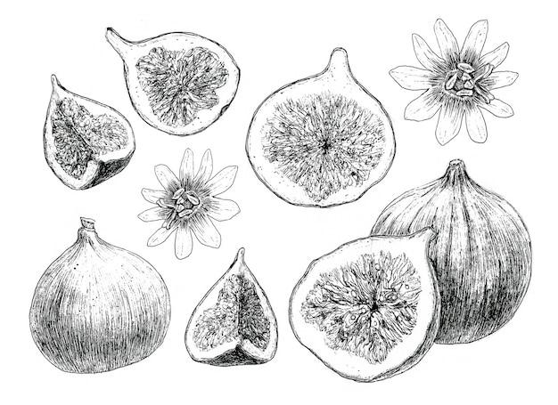 Figi zestaw rysunek odręczny do projektowania menu restauracji kawiarnia kuchnia