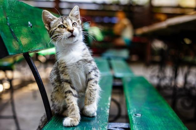 Figlarny kotek w paski na ławce w kawiarni