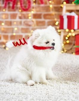 Figlarny pies z czapką mikołaja