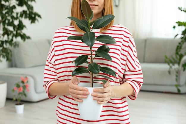 Figowiec kwiat w rękach dziewczynki. zielone liście rośliny domowej. kopia przestrzeń. miejska dżungla