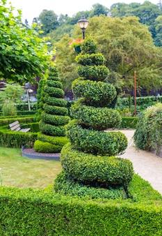Figura w kształcie abstrakcyjnego wiru z krzaków, letni park w europie. profesjonalne ogrodnictwo, europejski zielony krajobraz, dekoracja roślin ogrodowych