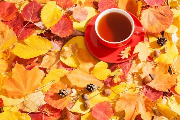 Filiżanka herbaty na ściennych jesień liściach