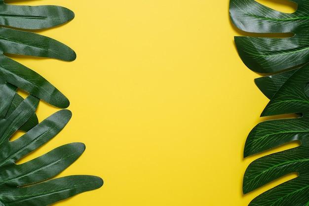 Filodendron tropikalny liście na żółtym tle koloru minimalne lato